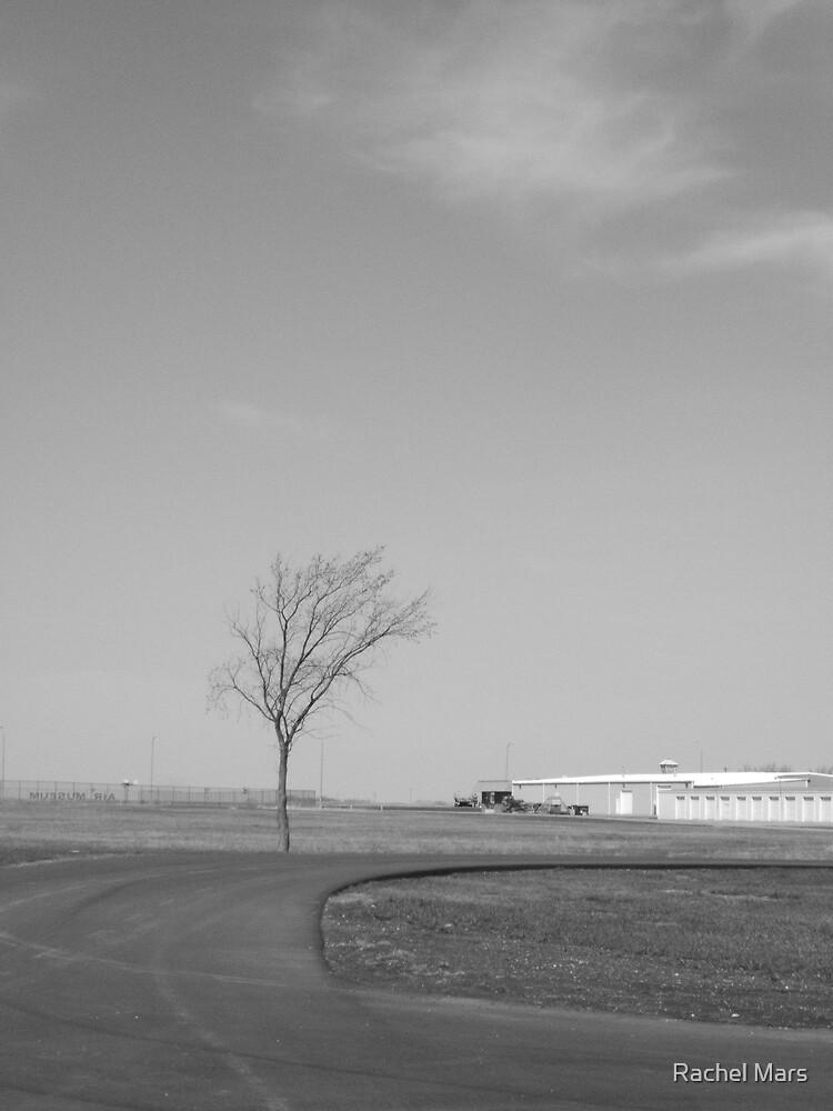 Lone Tree by Rachel Mars