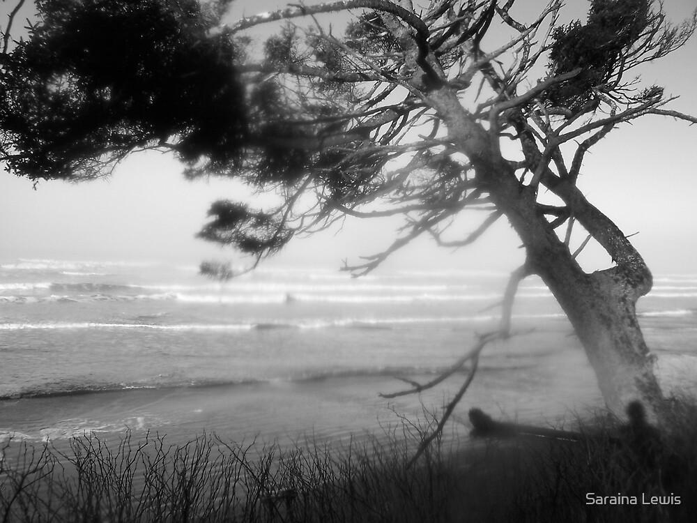 Winter Beaches 2 by Saraina Williams