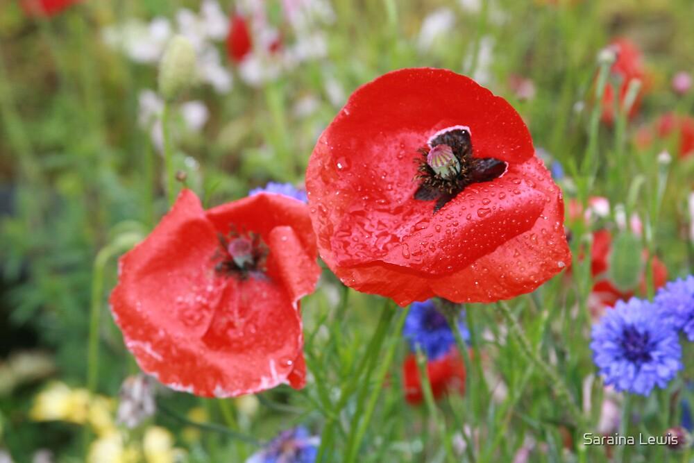 Poppies by Saraina Williams