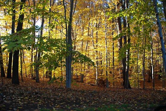 Golden Woods II by bunnij