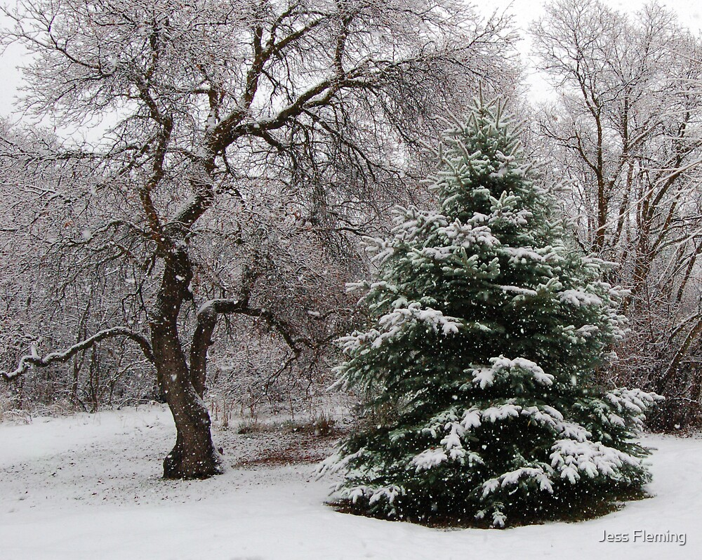 Mother Natures Christmas Tree by Jess Fleming
