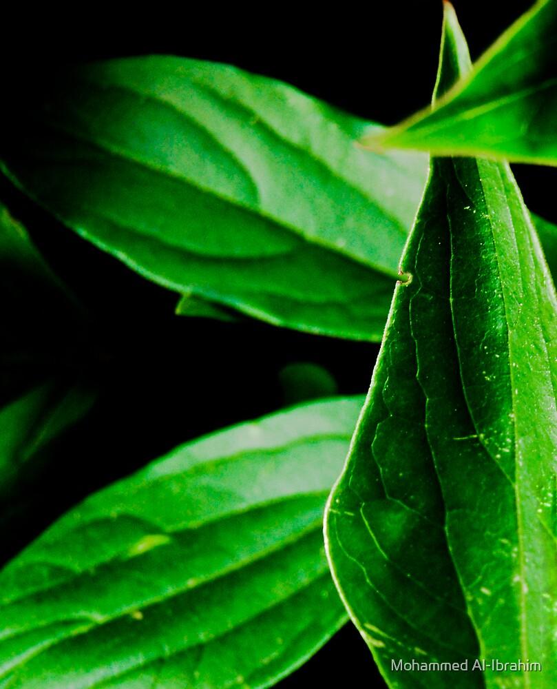 Leaves by Mohammed Al-Ibrahim