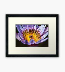 Puny Pollinator Framed Print
