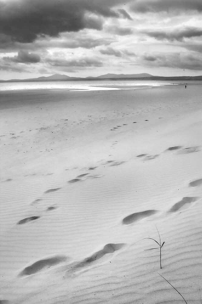 beachscape #1 by Jon Brayford