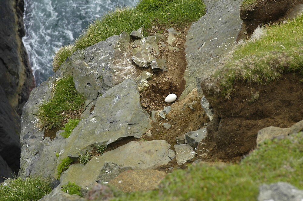 St Kilda, Gull's egg by JimWhitham