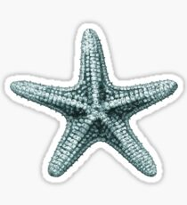 Antique Sea Starfish Illustration Sticker