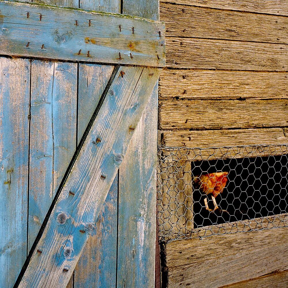 Rooster by Rachel Gellert