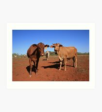 The Bovine Mafia, Pilbara Art Print