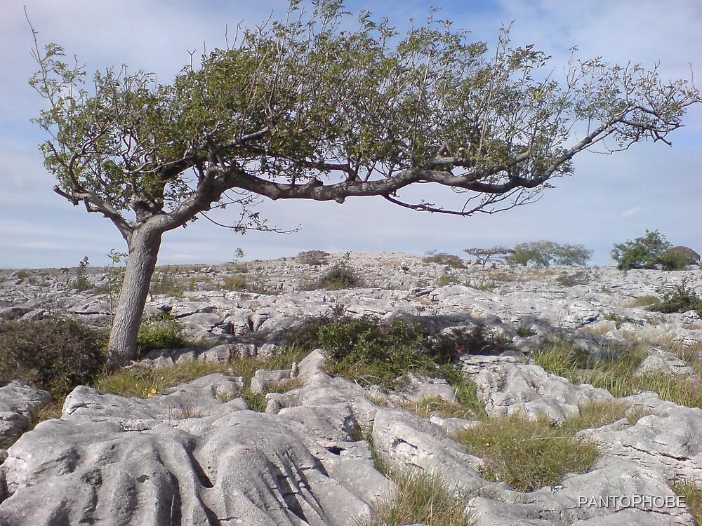 Tree of life by PANTOPHOBE