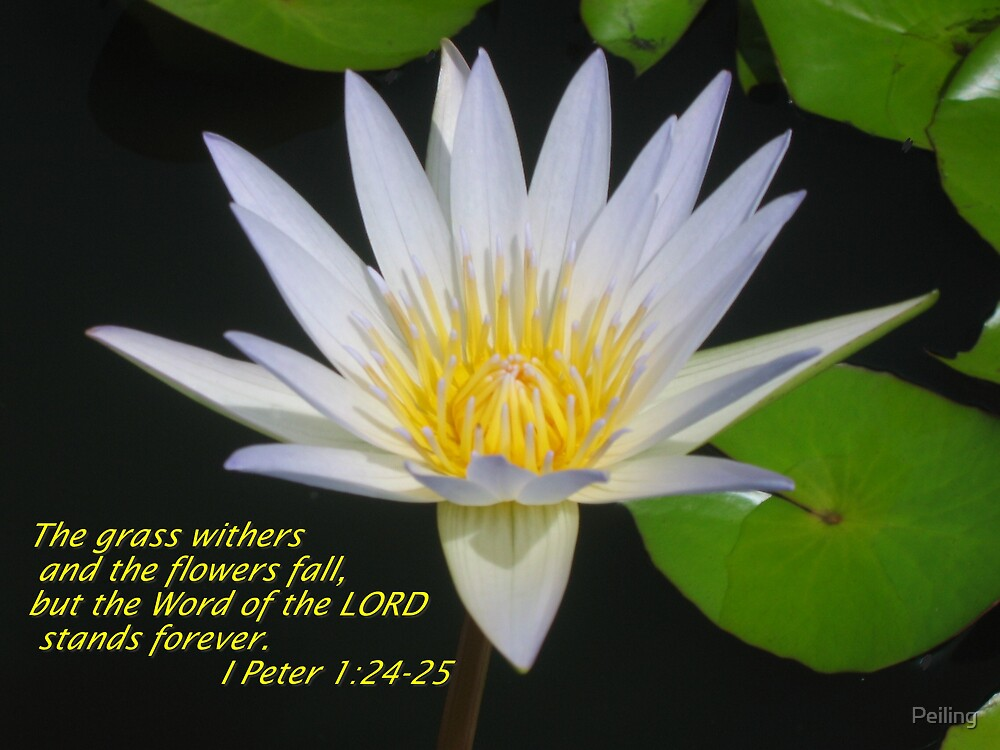 Christian Art - Lotus flower with scriptures by Peiling