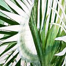 Fronds 1 by Summer Hues