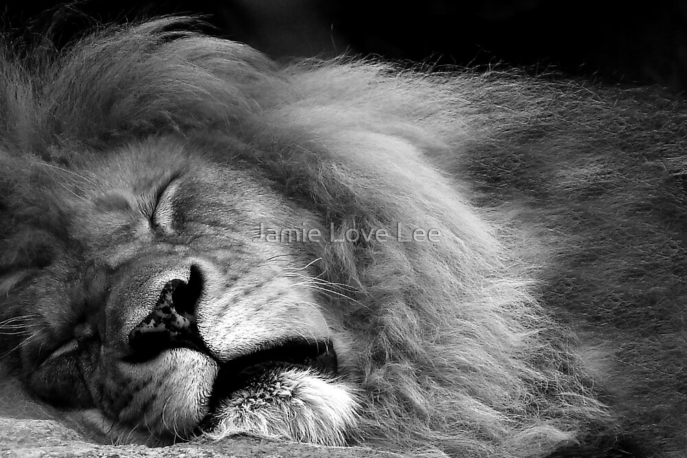 The King by Jamie Lee