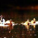 Duck by Per Ove Sleen