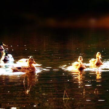 Duck by perovesleen