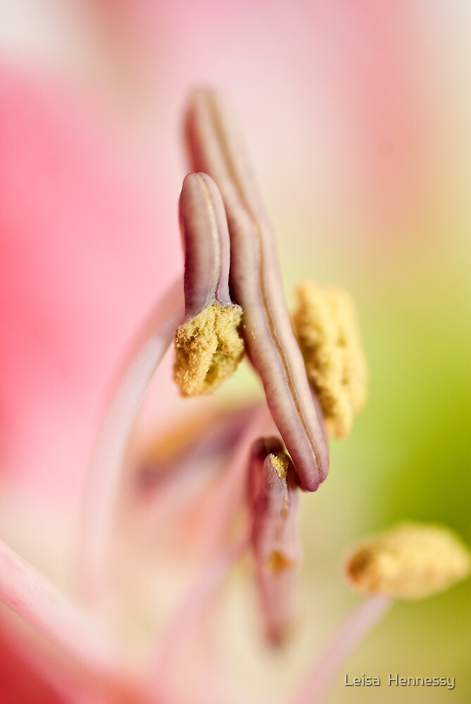 Stamens by Leisa  Hennessy