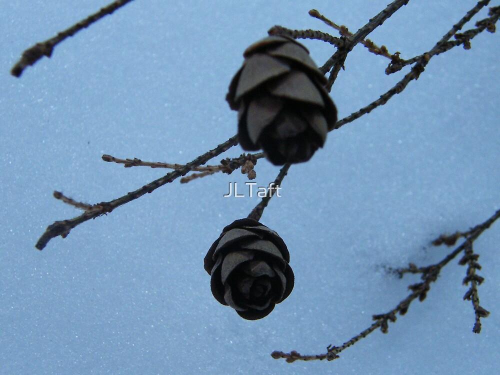 Winter Pinecones by JLTaft