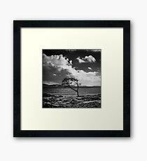 Tree by Loch Linnhe Framed Print