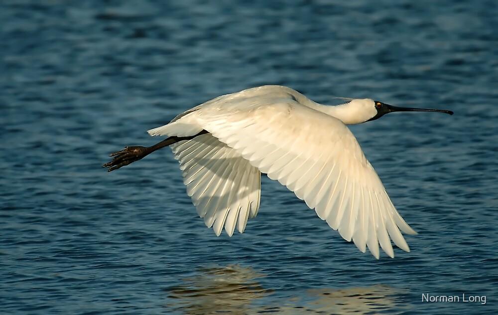 Spoonbill Flyspast by Norman Long