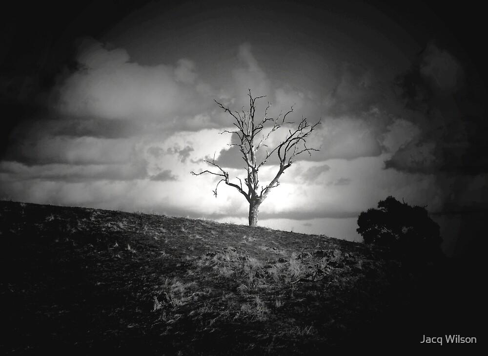 RISING STORM by Jacq Wilson