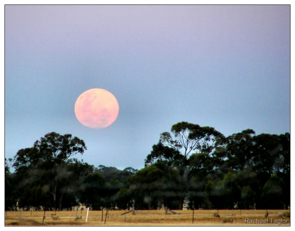 Country Moon by Rachael Taylor