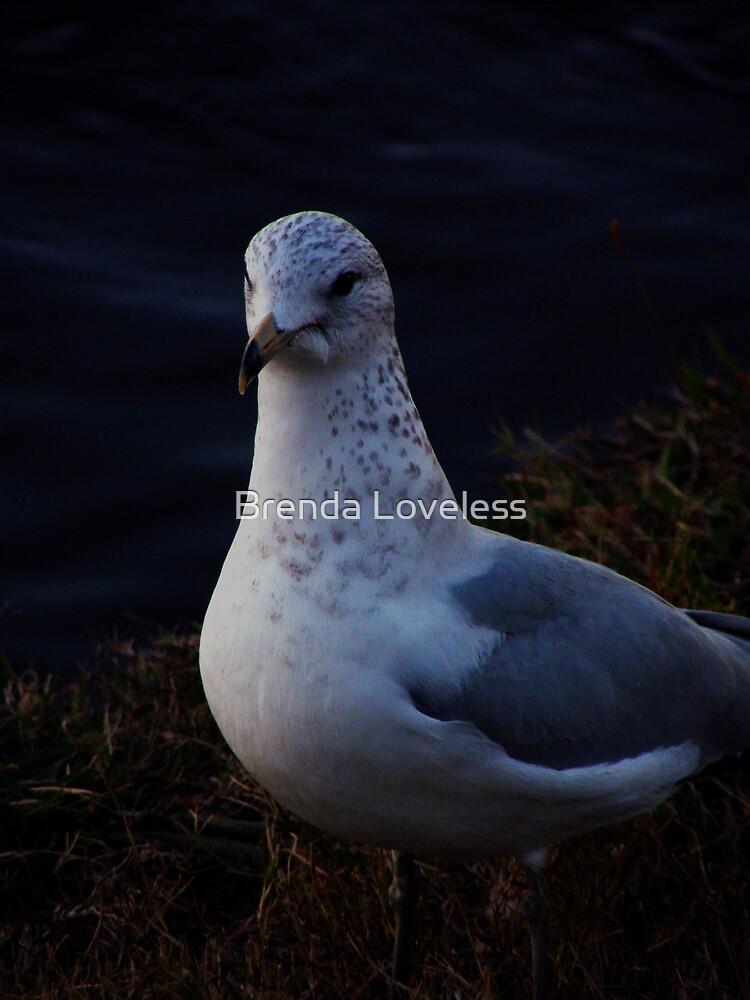model gull by Brenda Loveless