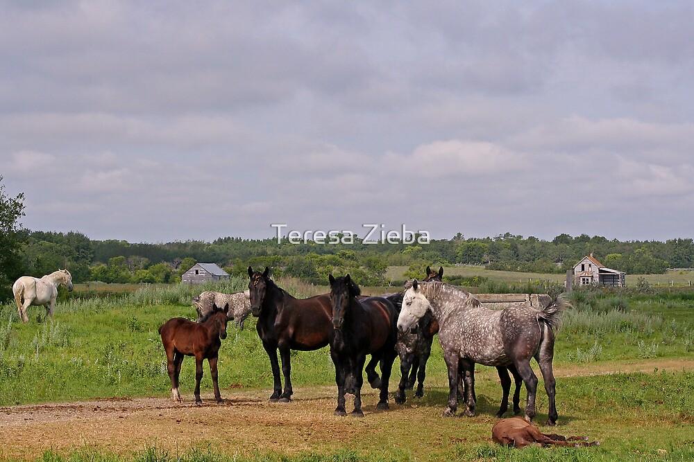 Rural Scenery by Teresa Zieba