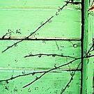 green wall with twigs by Lynne Prestebak