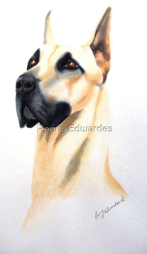 Great Dane by Penny Edwardes