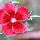 Flower Petals by TrinityCentaur