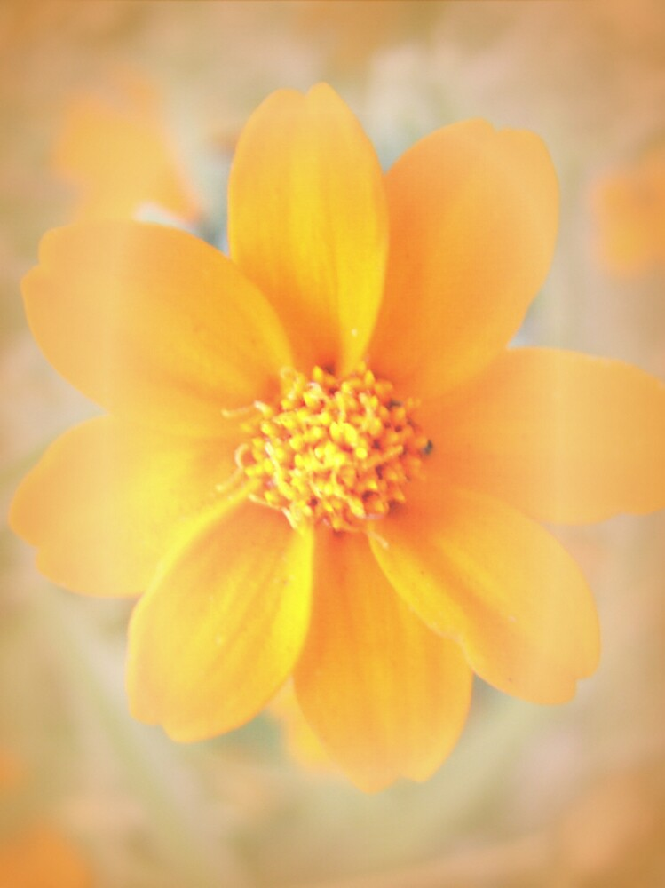 Yellow Flower by Triple8