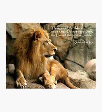 Aslan - Lion of Judah Photographic Print
