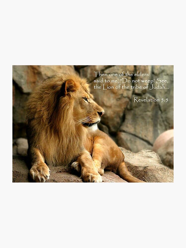 Aslan - Lion of Judah | Photographic Print