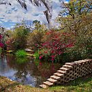 Side of the Pond by TJ Baccari Photography