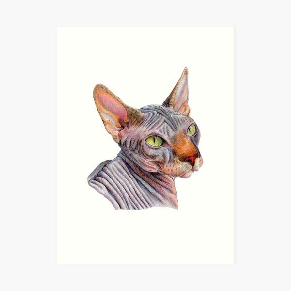 Sphynx Cat Illustration Art Print