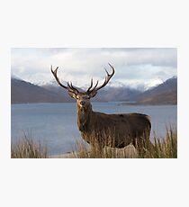 Royal Red Deer Stag in Winter Photographic Print