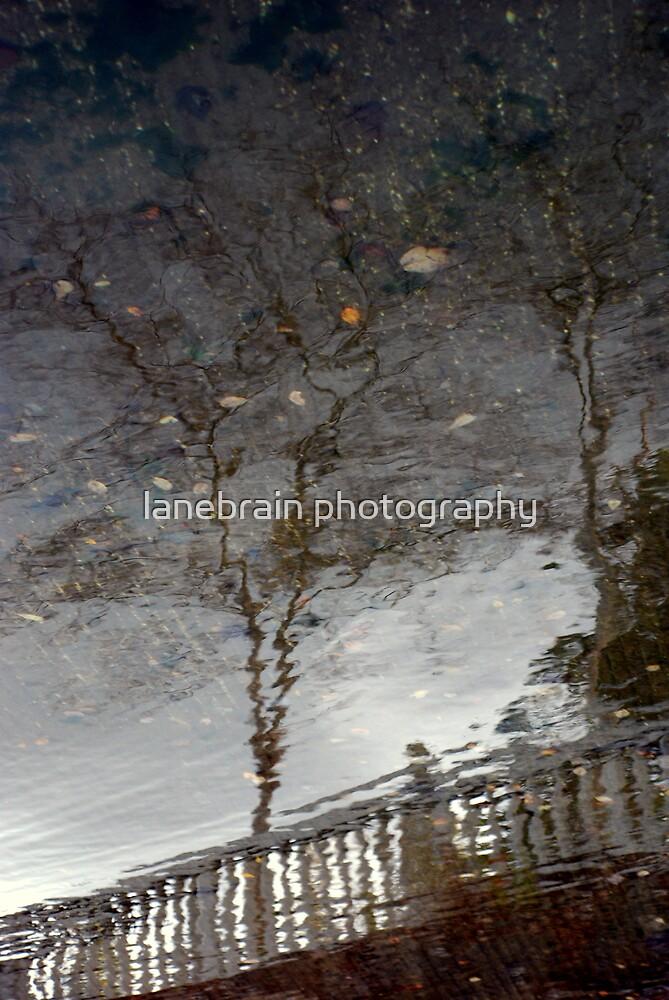 noitcelfer by lanebrain photography