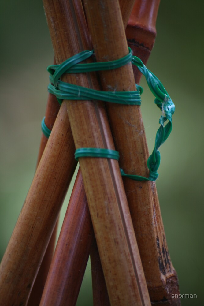 Bonded bamboo  by snorman