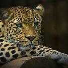 Wild Cats 1 ~ Lisa G. Putman by Lisa G. Putman