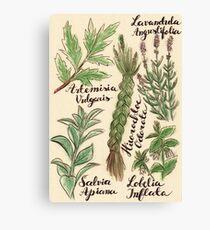 Magical Herbs Canvas Print
