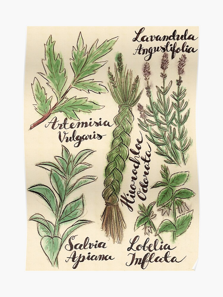 Magical Herbs | Poster