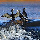 Cormorants at Exeter Quays Devon, UK by lynn carter