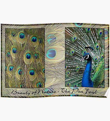 Beauty of Nature - The Pea Fowl Poster