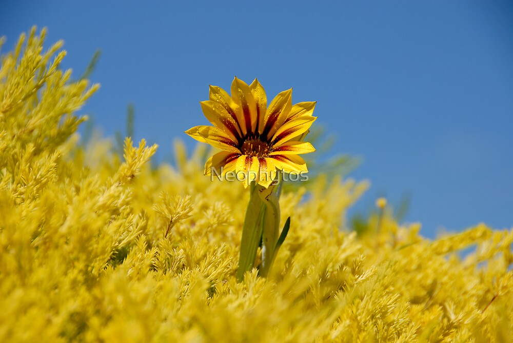 Yellow and Blue by Neophytos