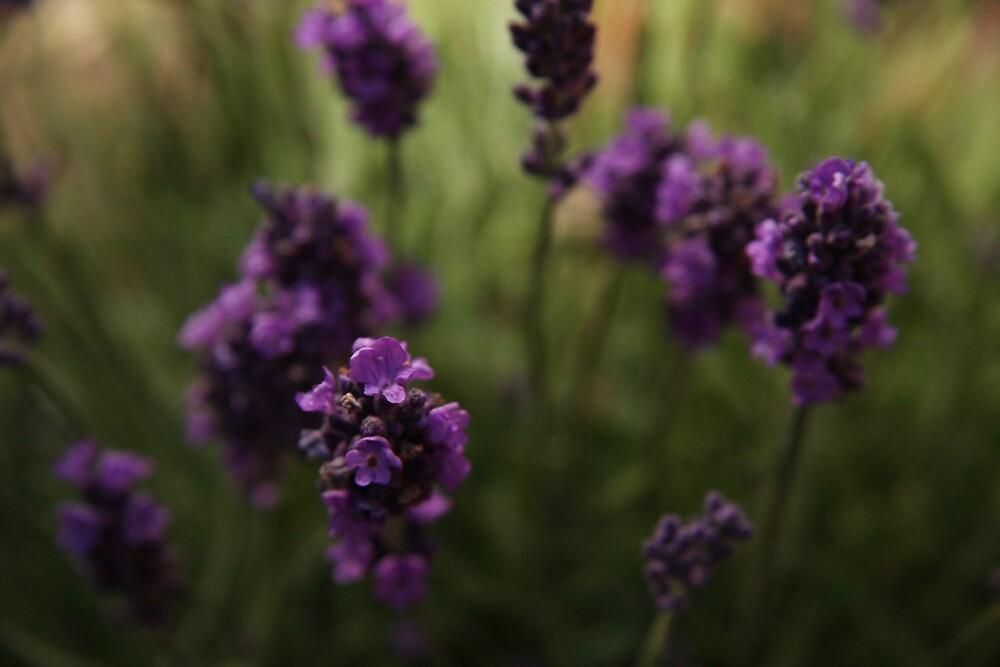 Purple haze by Andrew Edgar