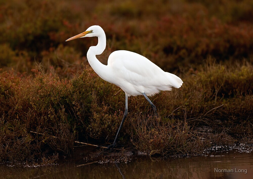 Egret by Norman Long