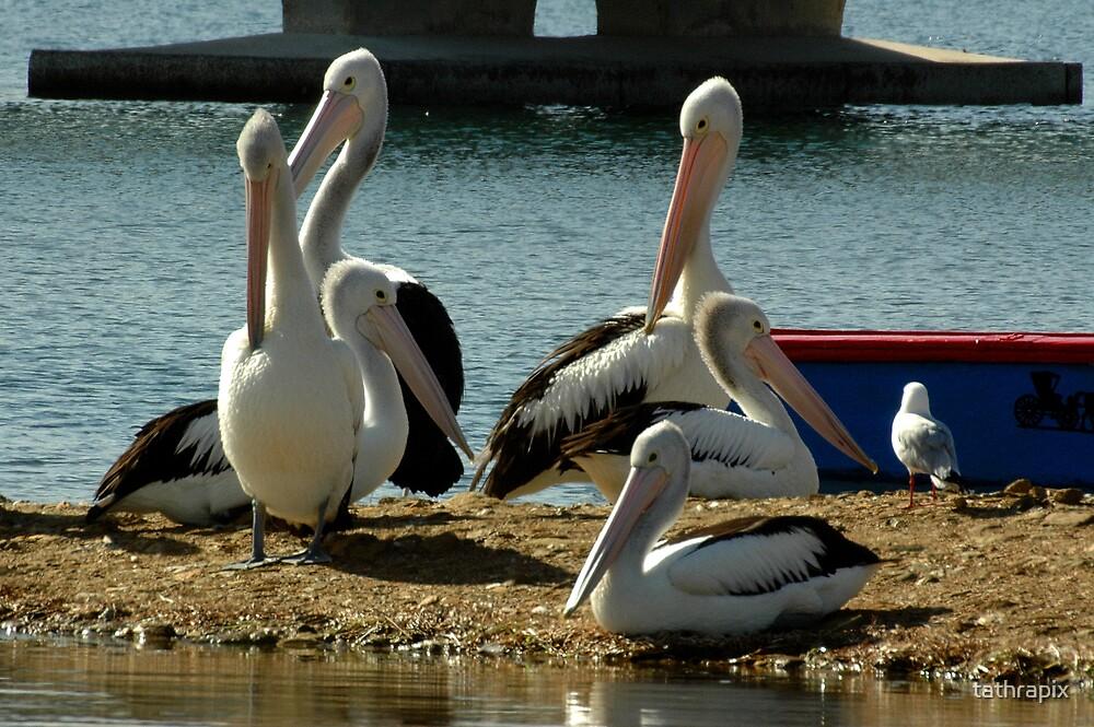 Pelican Party by tathrapix