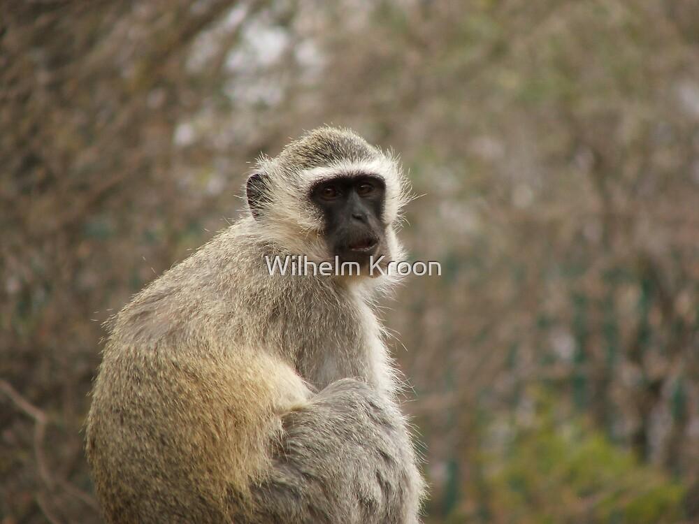 Monkey II by Wilhelm Kroon