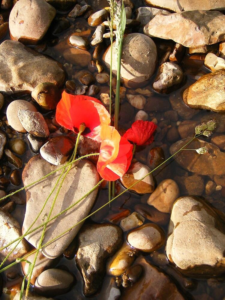 Poppy season by gemmagrace