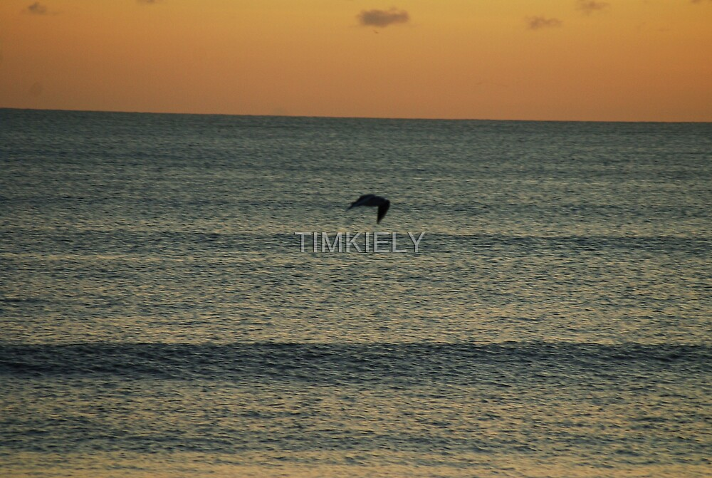 BIRD ON WATER by TIMKIELY