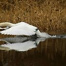 Underwing reflection by sootycat669